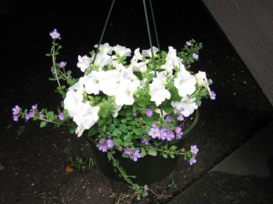 Some white wave petunias with some purple stuff (again...it's pretty, but I don't know what it is)